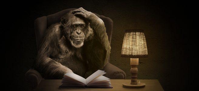monkey-1757972_1920
